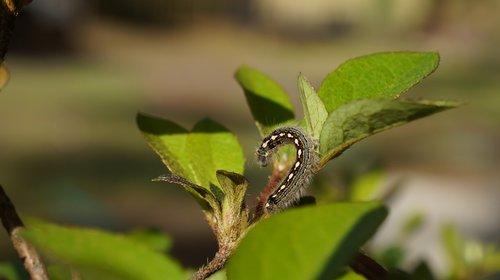 leaf  nature  flora