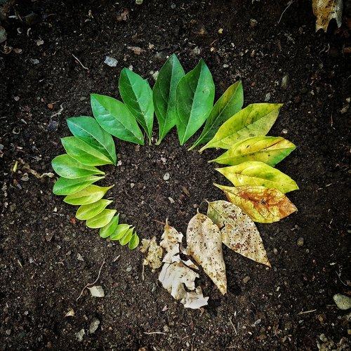 leaf  flora  soil