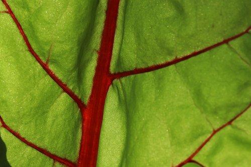 leaf  plant  background