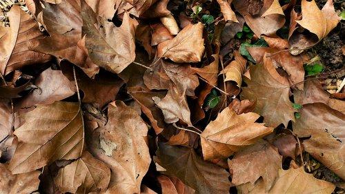 leaf  fall  nature