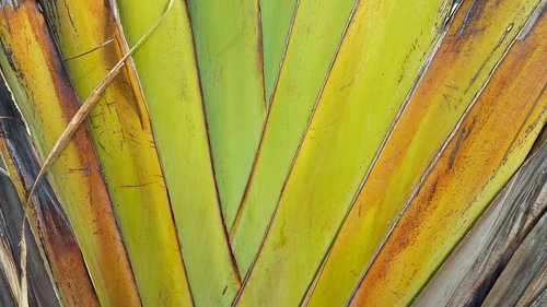 leaf  structure  exotic