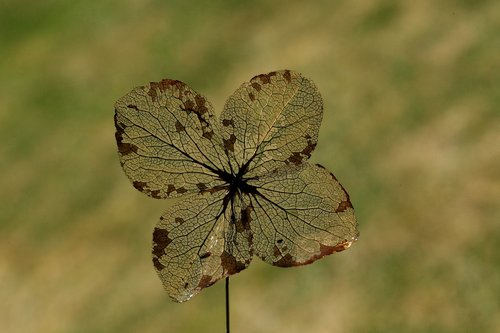 leaf  ribs  nature