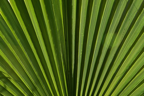 leaf  palm leaf  green