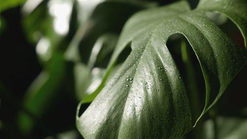 leaf  plant  holes