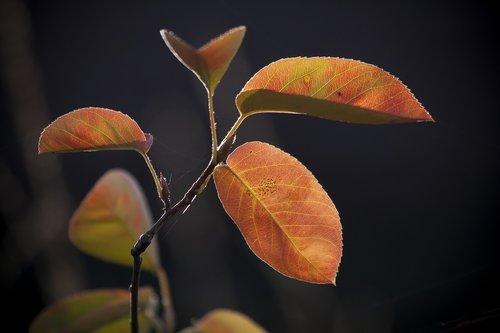 leaf  colored  autumn