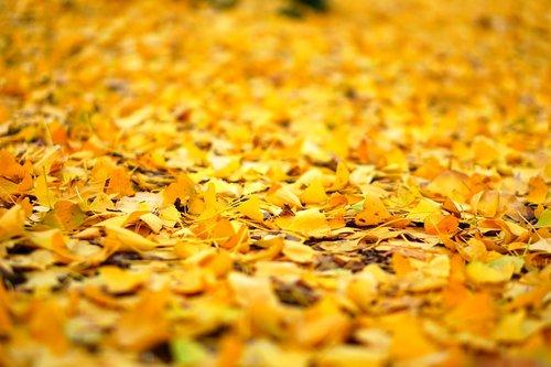 leaf  autumn  natural
