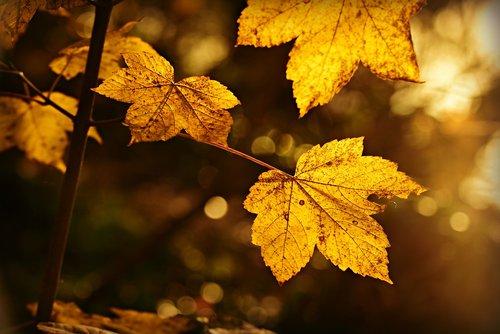 leaf  foliage  autumn leaf