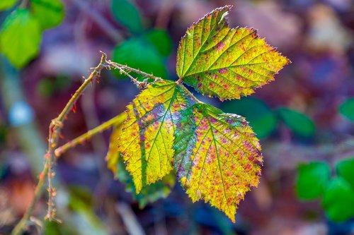 leaf  colorful  nature