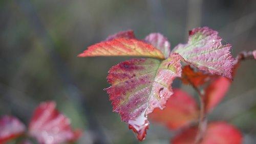 leaf  autumn  fall leaves