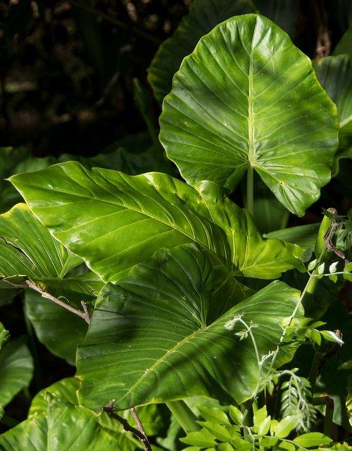 leaf  green  rain forest