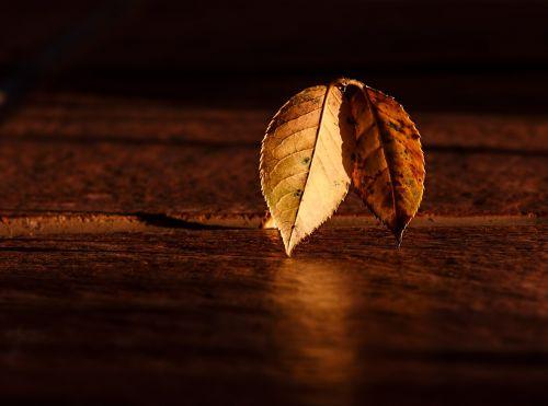 leaf autumn dawn
