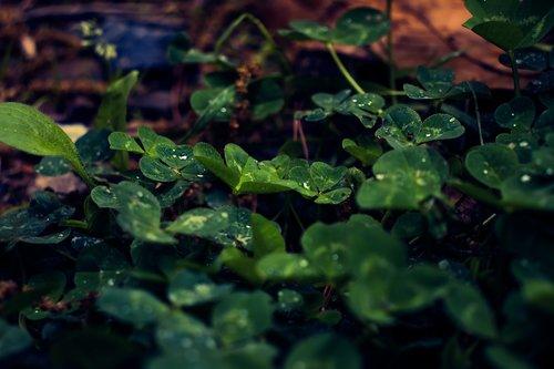 leaf  dew  glow