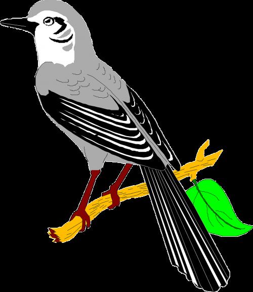 leaf bird branch