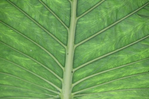 leaf green structure