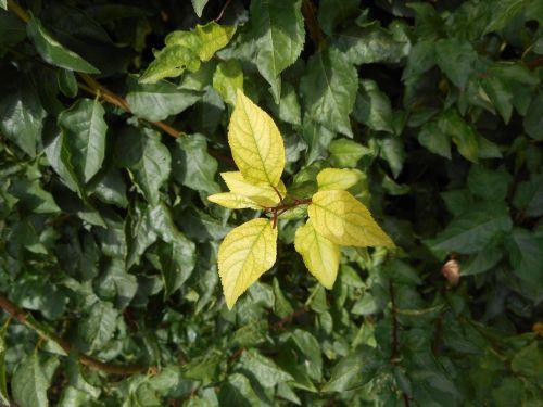 leaf green bush