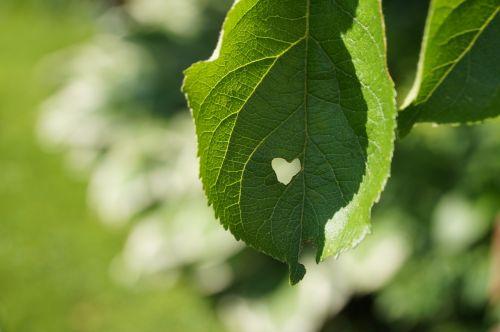 leaf heart summer