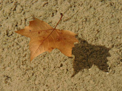 leaf dry leaf water