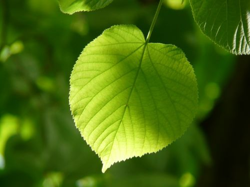 leaf individually linde