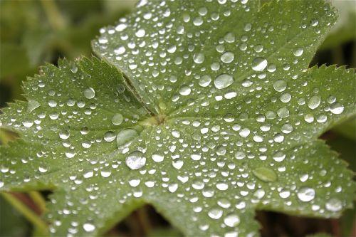 lapai,lašas vandens,vanduo,rasa,lašelinė