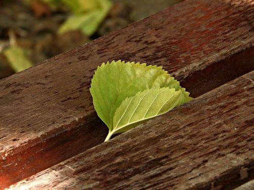 leaf bank park