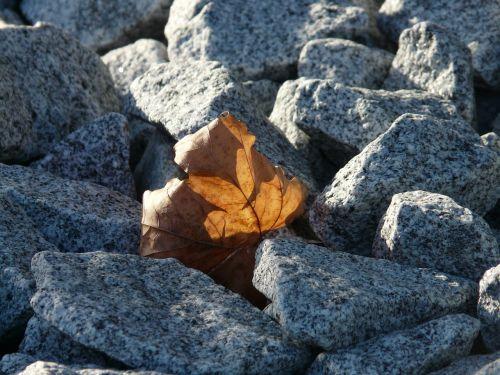 leaf leaves still life