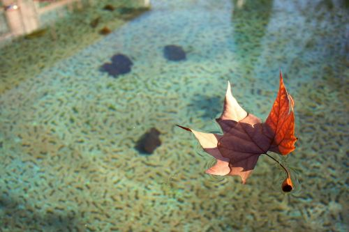 leaf water float