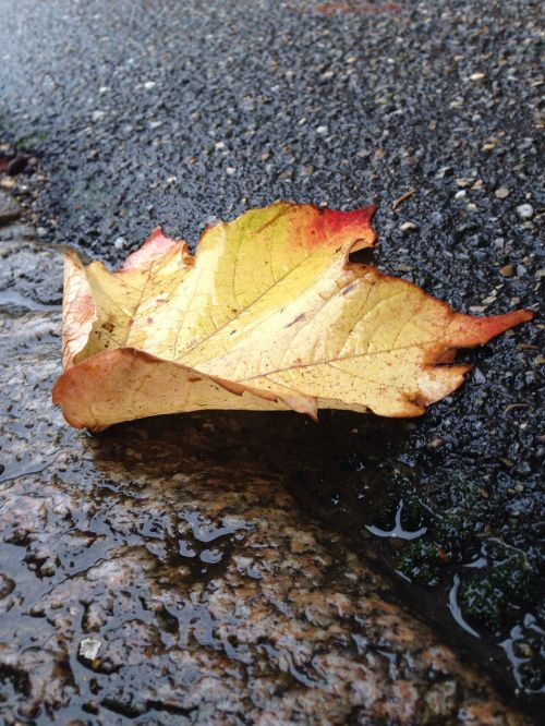 leaf nature dead leaf