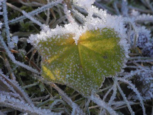 leaf frozen eiskristalle