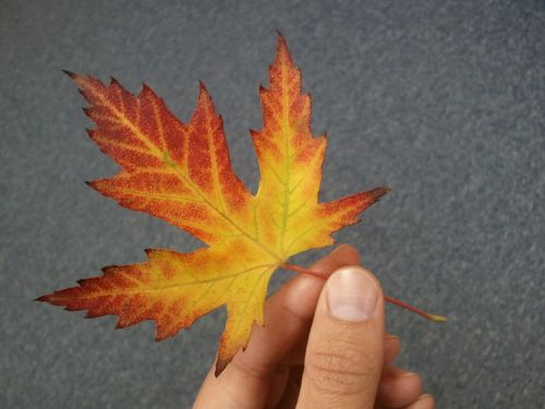 leaf the hand autumn