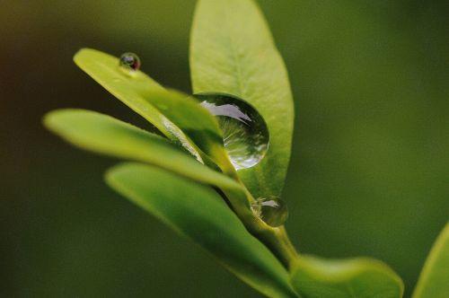 leaf hookah rain