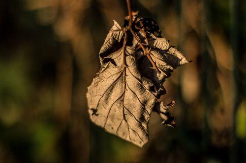 leaf dry sunlight
