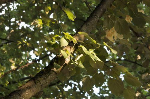 leaf tree spotlight