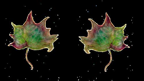 leaf maple leaves green leaf