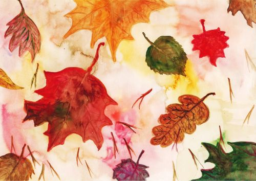 leaf maple leaves red leaf