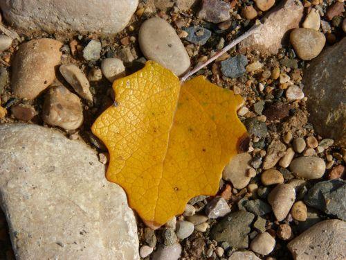leaf yellow stones