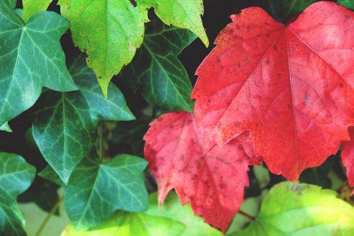 leaf red wall