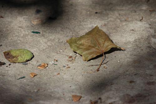 leaf nostalgia texture