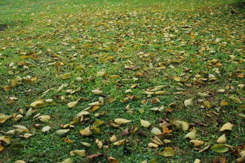 Leaf Carpeted Lawn