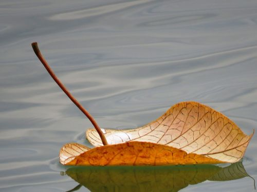 leaf floating floating leaf