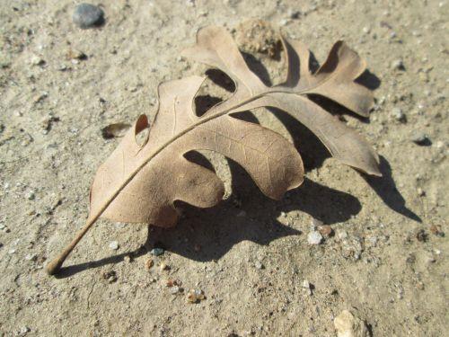 makro, augalas, gamta, lapai, augmenija, lapų makro 23