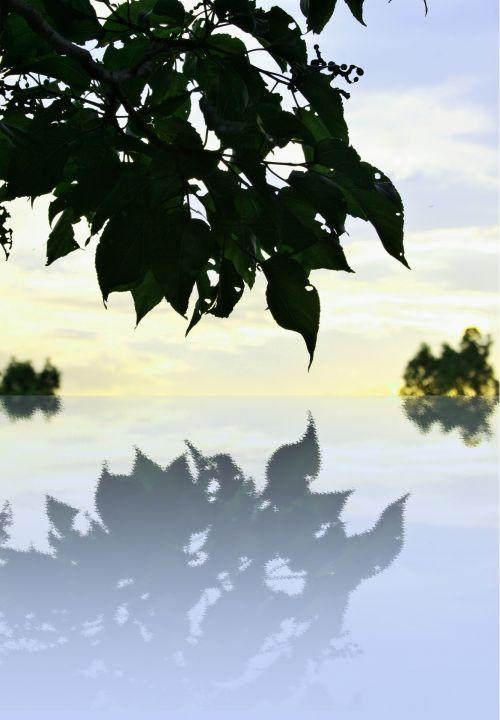 Leaf Reflection Effect