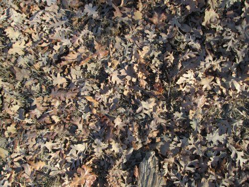 Leaf Texture 6