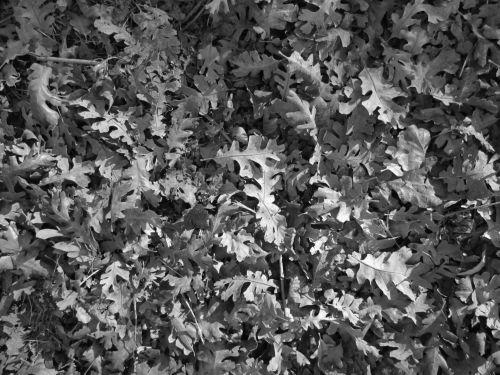 Leaf Texture 7