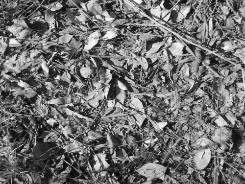 Leaf Texture II