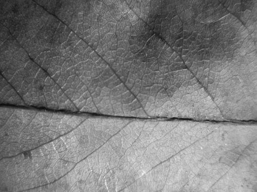 lapai, tekstūra, makro, augalas, fonas, lapo tekstūros makro 2