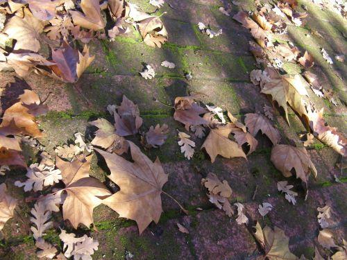 Leafed Walk