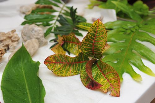 tropinis & nbsp, augalas, lapai, žalias, augalas, lapai 1
