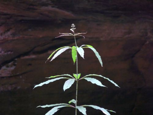 Leafy Plant In Cave