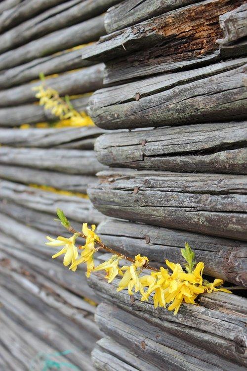 leap  flowers  fence