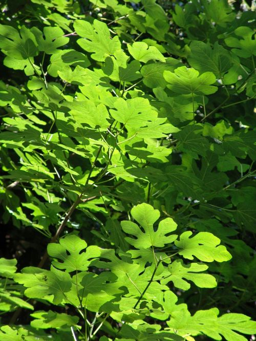 leaves,tree,green plant,subjects
